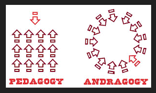pedagogy vs androgogy